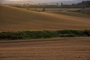 夕日に輝くムギ畑の写真素材 [FYI04847426]