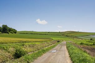 夏の丘陵畑作地帯の道の写真素材 [FYI04847436]
