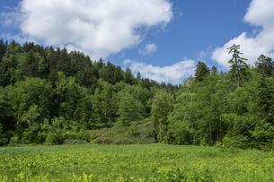 緑に包まれた初夏の高原 大雪山国立公園の写真素材 [FYI04847438]