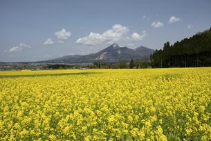菜の花畑と磐梯山の写真素材 [FYI04847528]