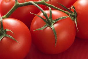 真っ赤に熟したトマトの写真素材 [FYI04847686]