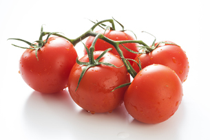 真っ赤に熟したトマトの写真素材 [FYI04847687]