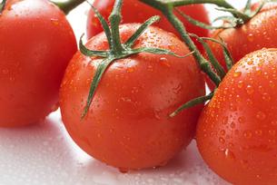 真っ赤に熟したトマトの写真素材 [FYI04847688]
