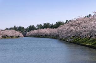弘前市 弘前公園の満開の桜の写真素材 [FYI04847867]