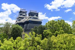 熊本城「熊本県伝統工芸館側から観た城」復興再建・最新2021年の写真素材 [FYI04848067]