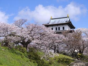 松前城の桜の写真素材 [FYI04848091]