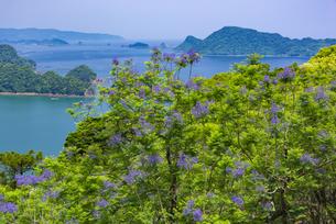 ジャカランダ咲く日南海岸の写真素材 [FYI04848372]