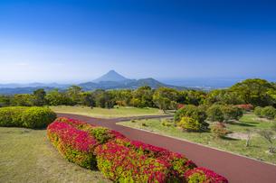 千貫平自然公園と開聞岳の写真素材 [FYI04848429]