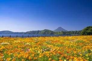 春の池田湖畔と開聞岳の写真素材 [FYI04848433]