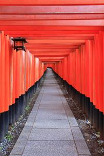 京都伏見稲荷大社 千本鳥居の写真素材 [FYI04848554]