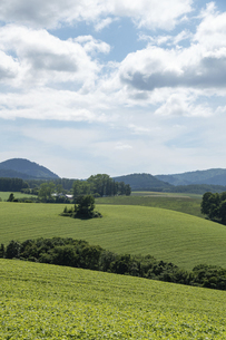 夏の緑の丘陵畑作地帯の写真素材 [FYI04848732]