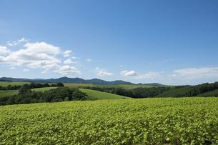 夏の緑の丘陵畑作地帯の写真素材 [FYI04848733]