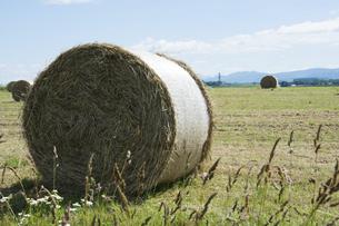 牧草畑の牧草ロールの写真素材 [FYI04848739]