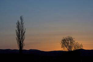 美しい夕焼空とポプラのシルエットの写真素材 [FYI04848741]