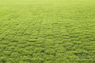 芝生の写真素材 [FYI04848803]