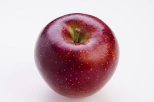 秋映りんごの写真素材 [FYI04848806]