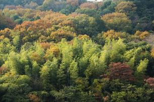 紅葉に映える山の写真素材 [FYI04848808]
