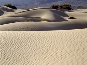 デスバレーの砂丘の写真素材 [FYI04848984]