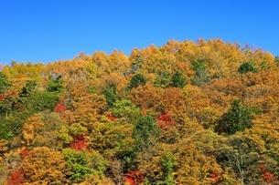 横谷峡の紅葉の写真素材 [FYI04849186]