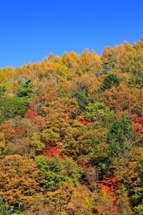 横谷峡の紅葉の写真素材 [FYI04849187]