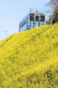 閏住の菜の花・愛ある伊予灘線の写真素材 [FYI04849336]