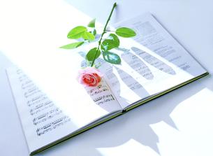 楽譜と一輪の薔薇の写真素材 [FYI04849497]
