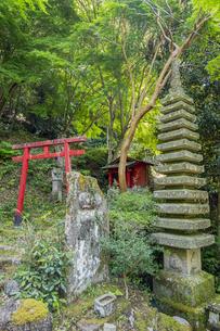 修善寺温泉 指月殿境内にある南想塔と鳥居の写真素材 [FYI04849549]