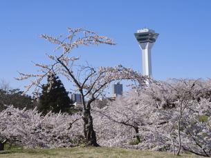 五稜郭タワーと桜の写真素材 [FYI04849659]