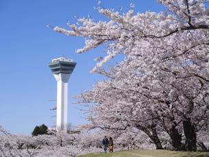 五稜郭タワーと桜の写真素材 [FYI04849660]