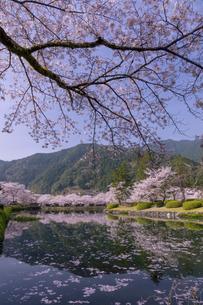 満開のソメイヨシノ(奈良県下北山村、スポーツ公園)の写真素材 [FYI04850134]