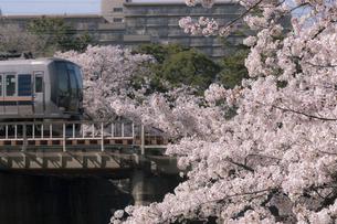 満開の桜と鉄道(兵庫県夙川)の写真素材 [FYI04850146]