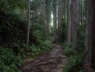 熊野古道の写真素材 [FYI04850243]