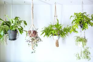 吊るし植物のハンギングプランターのグリーンがある室内の写真素材 [FYI04850279]