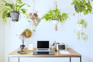 吊るし植物のあるワーキングスペースの写真素材 [FYI04850280]