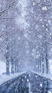 冬のメタセコイア並木の写真素材 [FYI04850286]