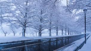冬のメタセコイア並木の写真素材 [FYI04850292]