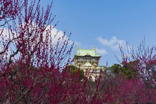 大阪城と梅林の写真素材 [FYI04850309]
