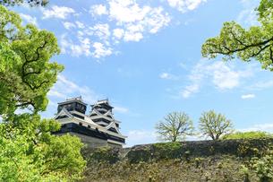 熊本城「足場が消えた復旧天守輝く熊本城」2021年春の写真素材 [FYI04850810]