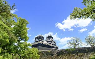 熊本城「足場が消えた復旧天守輝く熊本城」2021年春「青空と城全景」の写真素材 [FYI04850836]