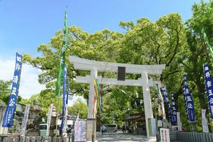 加藤神社(うららかな春の季節風景)の写真素材 [FYI04850839]