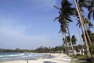 ビンタン島のリゾート地に茂るヤシの木と青空と海 インドネシアの写真素材 [FYI04850879]