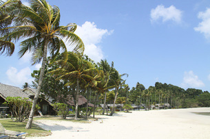 ビンタン島のリゾート地に茂るヤシの木と青空 インドネシアの写真素材 [FYI04850880]