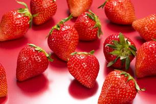 真っ赤に熟した苺の写真素材 [FYI04851081]