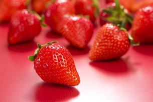 真っ赤に熟した苺の写真素材 [FYI04851082]