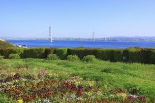 淡路島より明石海峡大橋を望むの写真素材 [FYI04851089]