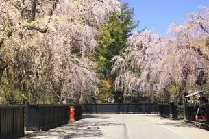 桜咲く角館武家屋敷の写真素材 [FYI04851175]