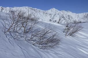 冬晴れの八方尾根から白馬三山の景色の写真素材 [FYI04851500]