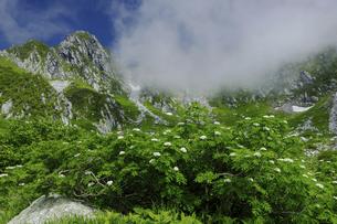 千畳敷カールのナナカマドの花と宝剣岳の写真素材 [FYI04851512]