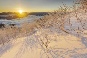 朝日に輝く樹氷の千畳敷カールの写真素材 [FYI04851515]