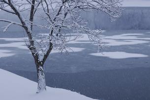 解氷始まる中綱湖の写真素材 [FYI04851525]